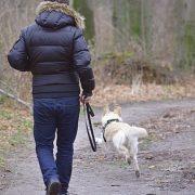 hund-will nicht an der Leine laufen