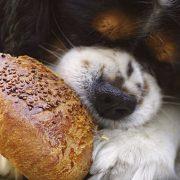 Hund frisst nicht