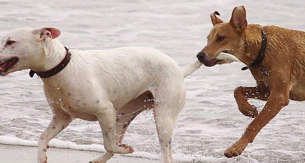 Hund will nicht ins Wasser