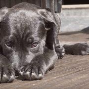 Hund will nicht mehr laufen