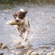 Hund will immer spielen